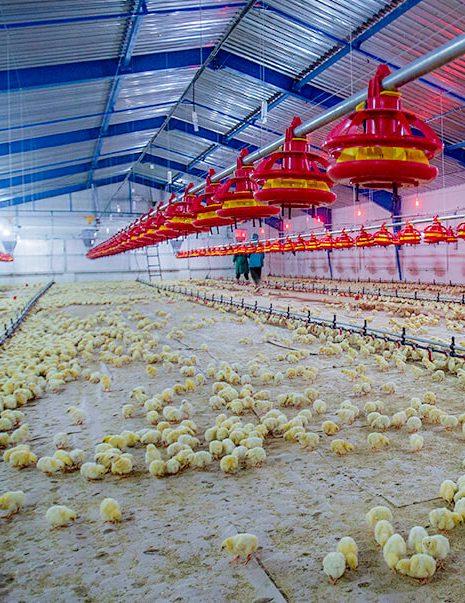 Boustan Poultry Farm