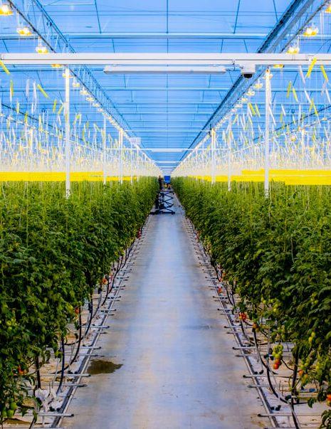 Boustan Mega Greenhouses