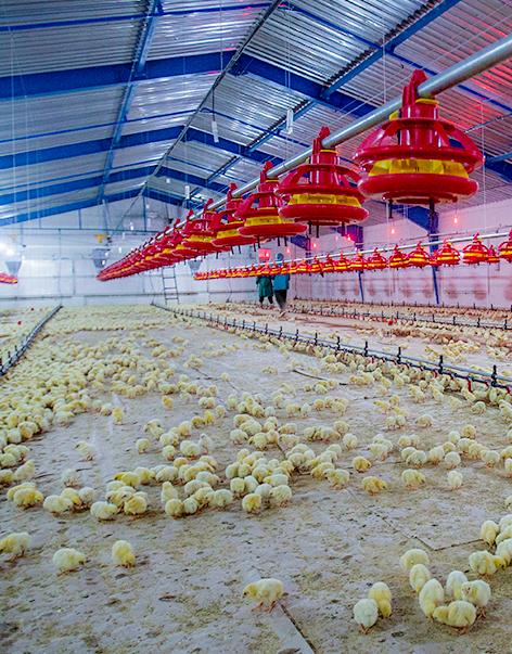 Boustan Poultry