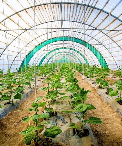 Boustan Greenhouses