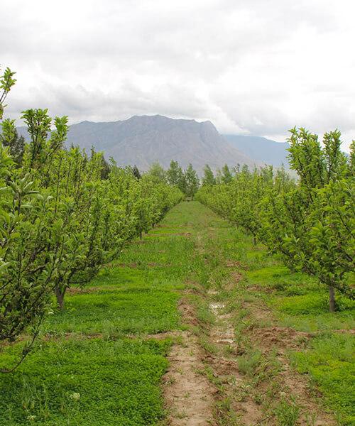 Boustan Farm pic