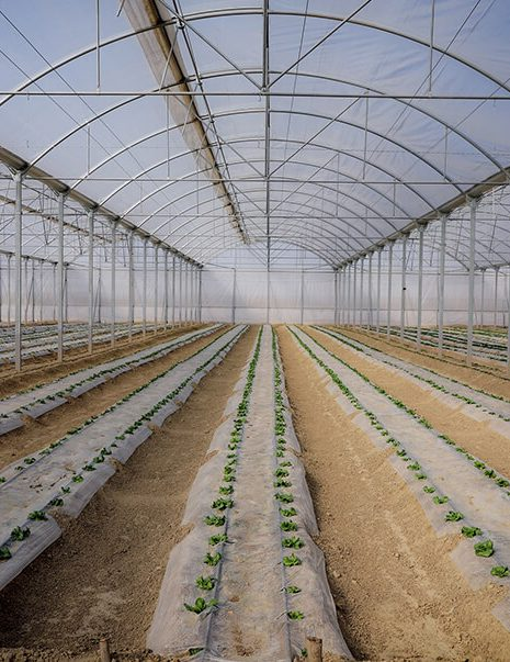 Boustan Green Houses